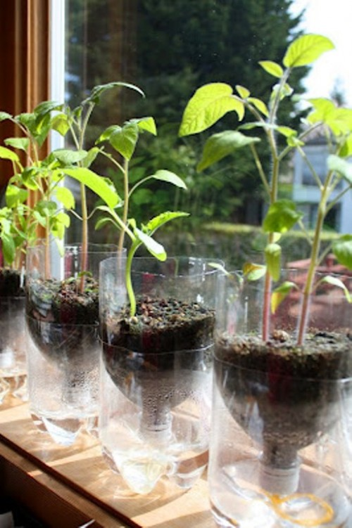 FREE Green Planter Idea~ Use recycled pop bottles to make self- watering planters. You'll also need potting soil, seeds, thick string, a Phillips screwdriver, hammer, and a sharp blade to cut the bottle. These are great science projects, craft sale items, or holiday gifts. Cheap, easy, and fun!